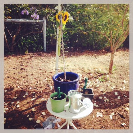 Wendy Grace Hendry - Margaret River Celebrant - Tree Planting Ceremony