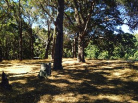 The ceremony clearing at Fair Harvest, Margaret River
