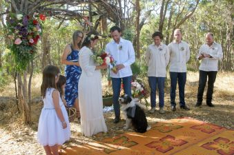Bo-Jangles was a super handsome ring bearer in his fancy bow. Photo by Zuzu.