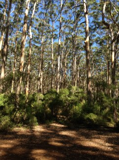 Ceremony Clearing in the Boranup Forest Margaret River