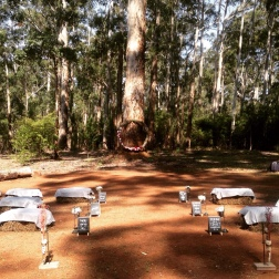 Rustic wedding ceremony at Donnelly River Village, WA.