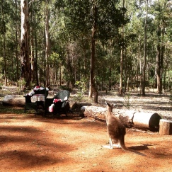 Donnelly River Village Wedding Ceremony - a local kangaroo checks out the signing table!