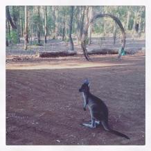 Wedding Rehearsal Kangaroo Visitor - Wendy Grace Hendry Celebrant